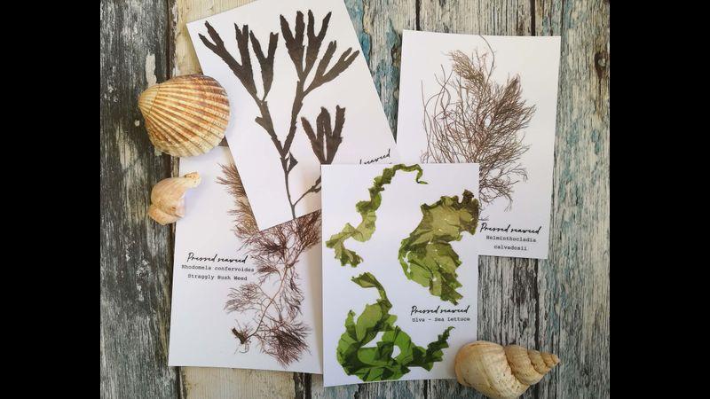 Seaweed pressing postcards