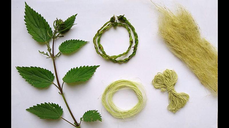 Nettle plant, Nettle Fibre, Nettle string, Nettle Yarn
