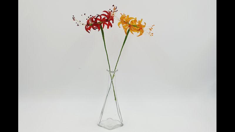 A red and yellow Spider Lily