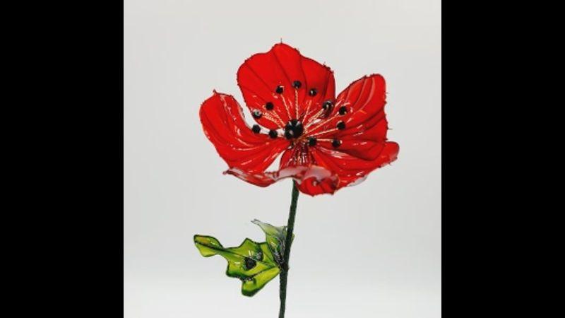 One single Poppy with leaf
