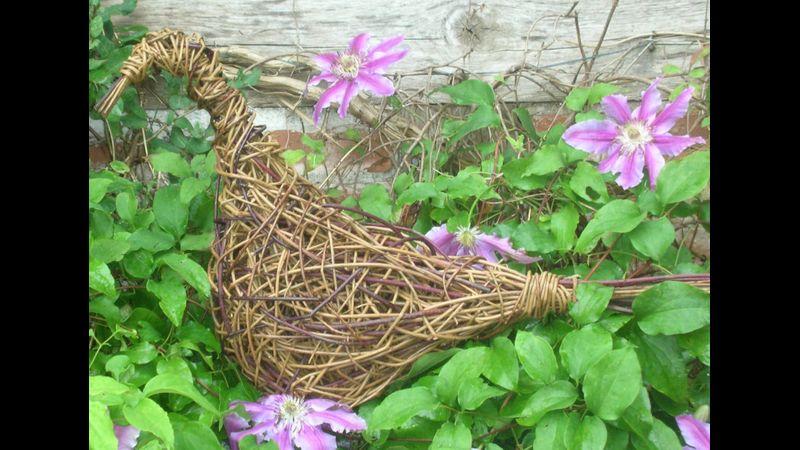 Willow bird