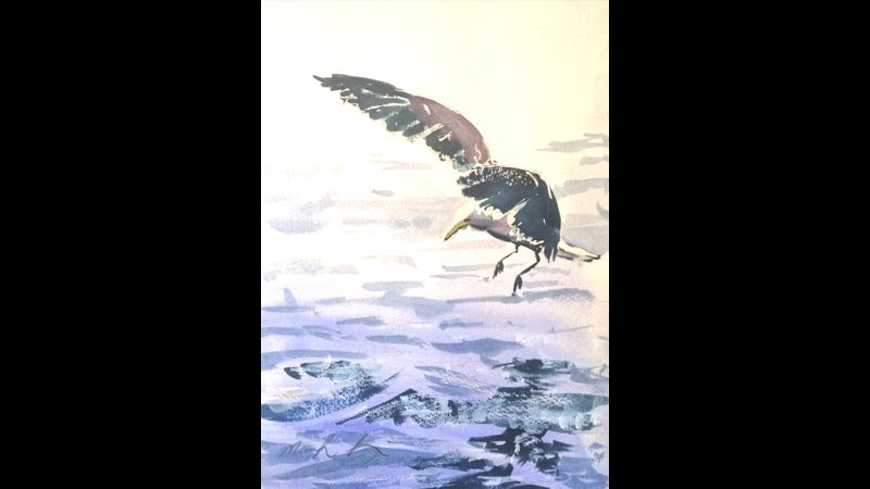 finished 20 minute gull