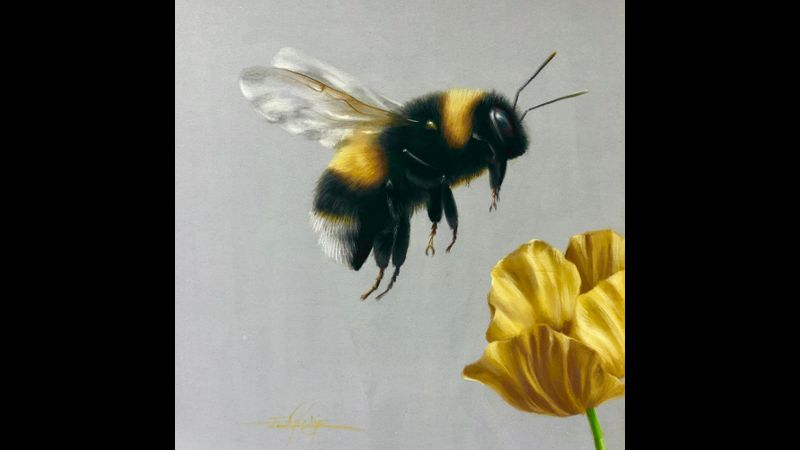 We will produce this Bumblebee in flight for the lesson.