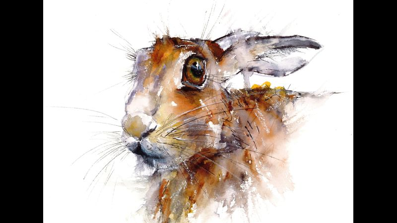Timid Hare - Drawing Wildlife in the Lake District National Park