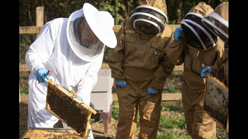 Hands on hive inspections in Windsor