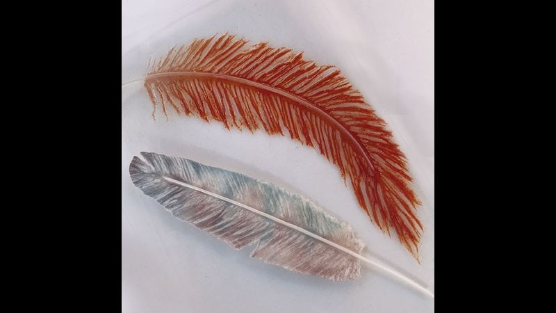 Delicate glass feathers