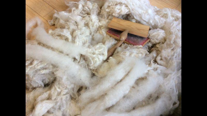 Fleece carded into rolags