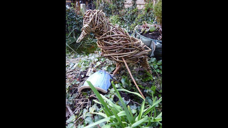 Willow woodpecker in garden