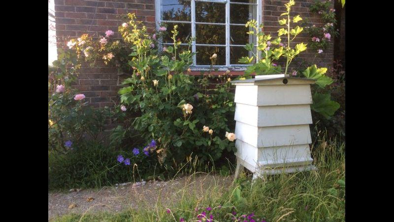 Beehive in my garden