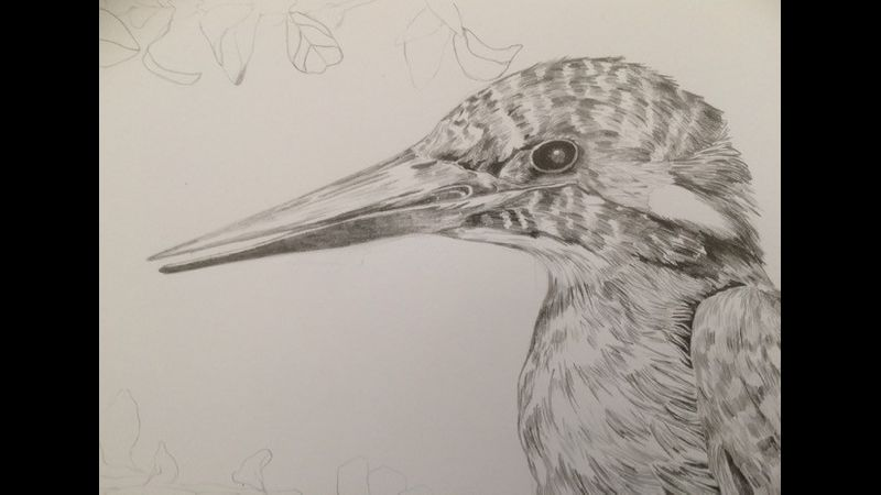 Pencil sketch of a kingfisher