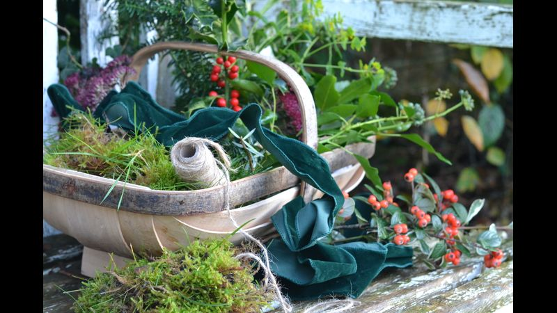 Gathering foliage and moss for festive wreath making