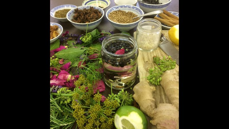 raw materials for botanical gin workshop and wild cocktails workshop in Herefordshire