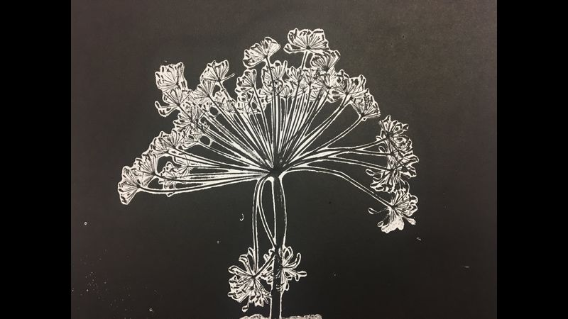Monotype print of Dill plant.