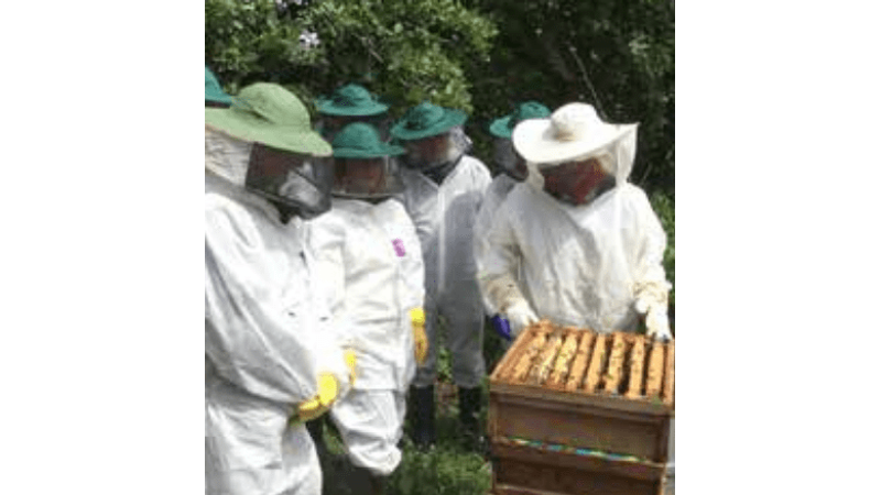 Looking at the bee hives at Acton Scott