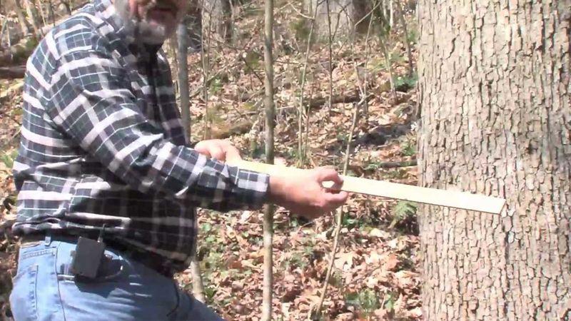 Timber Measuring