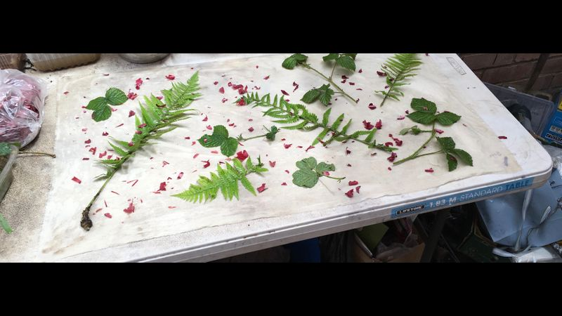 Ecodyeing: Laying out blackberry, fern and red onion leaves.