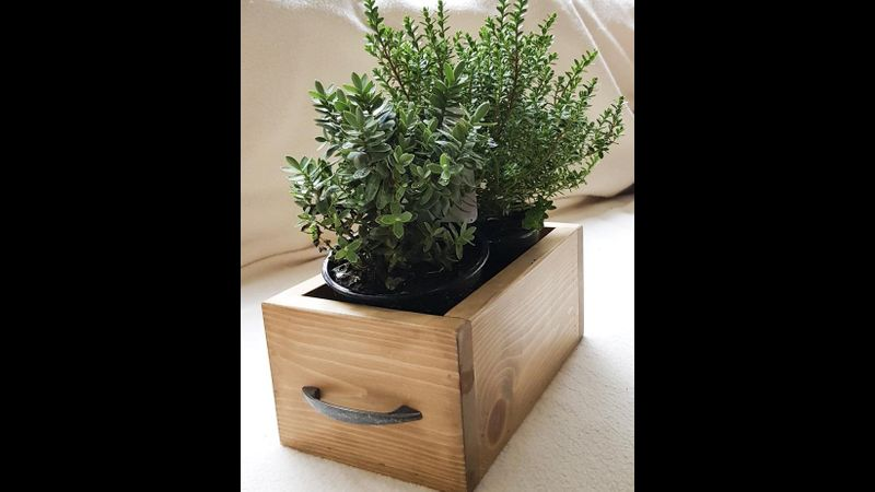 Make a planter beginners woodworking evening course