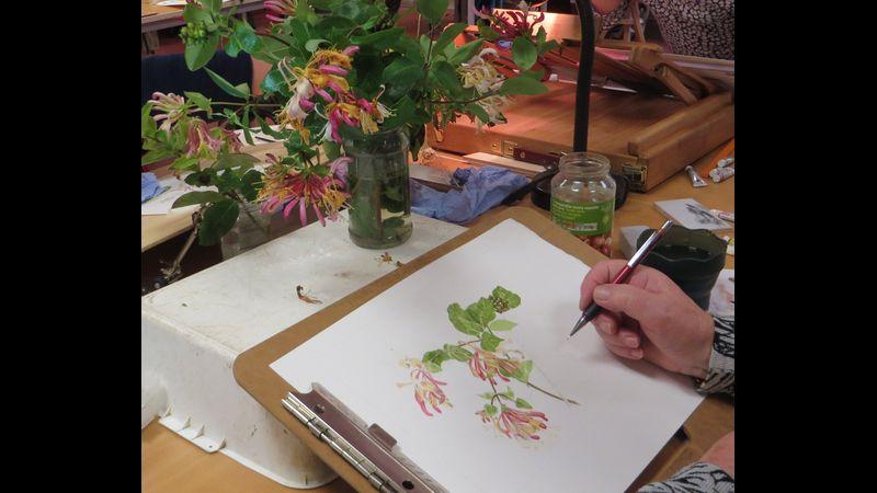 Beautiful botanical illustration at Margam Discovery Centre