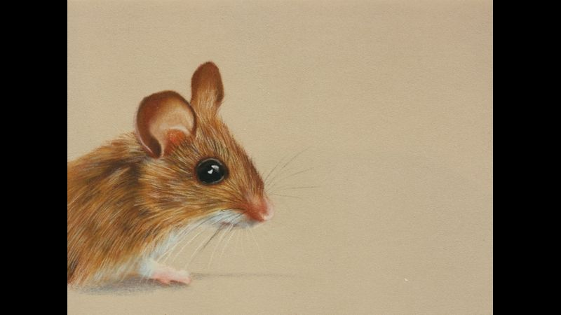 Pastel pencil fieldmouse with Emily Rose at Cambridge Art Makers