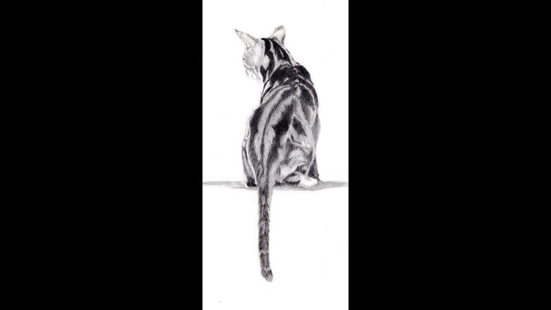 Jake pencil drawing