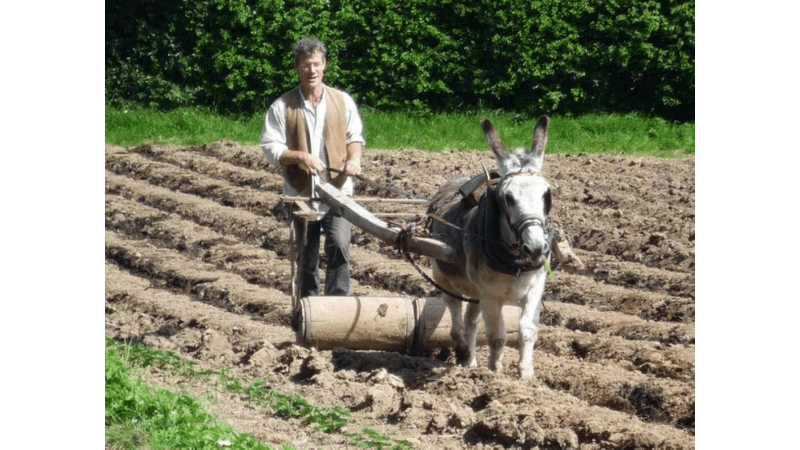 Working the donkey at Acton Scott