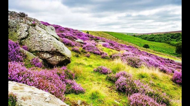 Landscape painting in the North York Moors