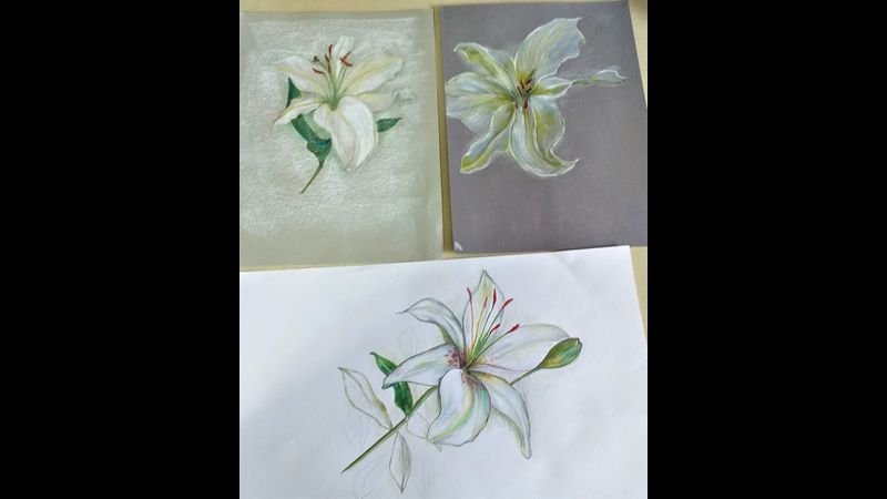 Students' pastel and coloured pencil drawings of lilies