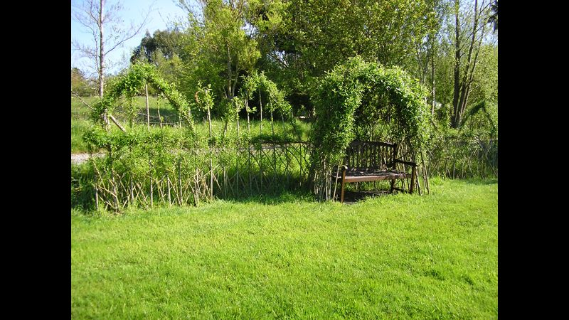 Living willow arbour & fedge at Higher Barn