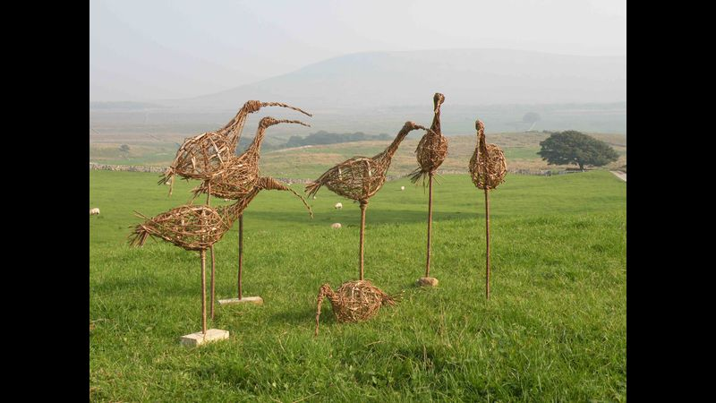 Curlews in the Dales landscape