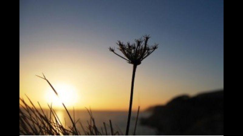 Cornwall through a lens