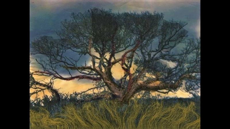 Purbeck Tree                          by Imogen Bittner