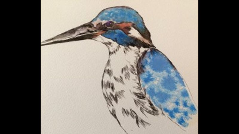 Kingfisher in ink and watercolours