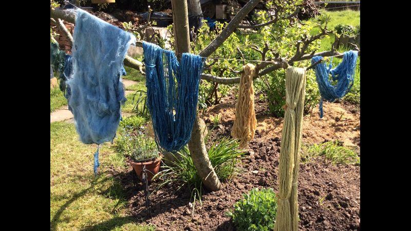 Dyeing in the garden