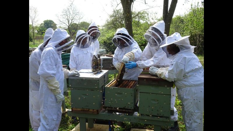 Students at the apiary