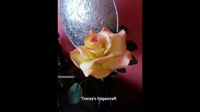 Classic tea rose