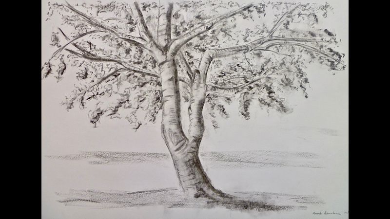 Charcoal drawing of tree