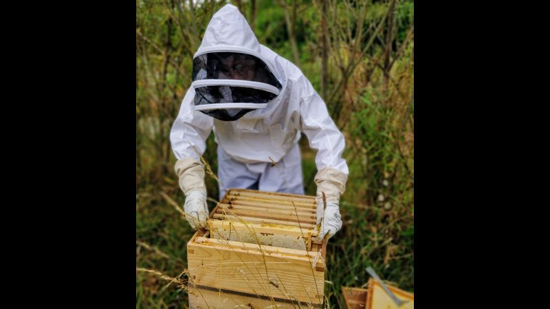 The supers is the part where the colony stores honey. You will learn how to understand when they are full and how to arrange them to have a better honey production.