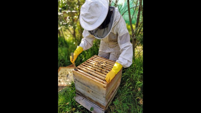 Learn how to inspect a beehive