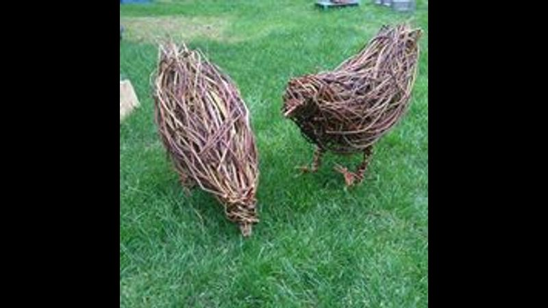 Willow Chickens