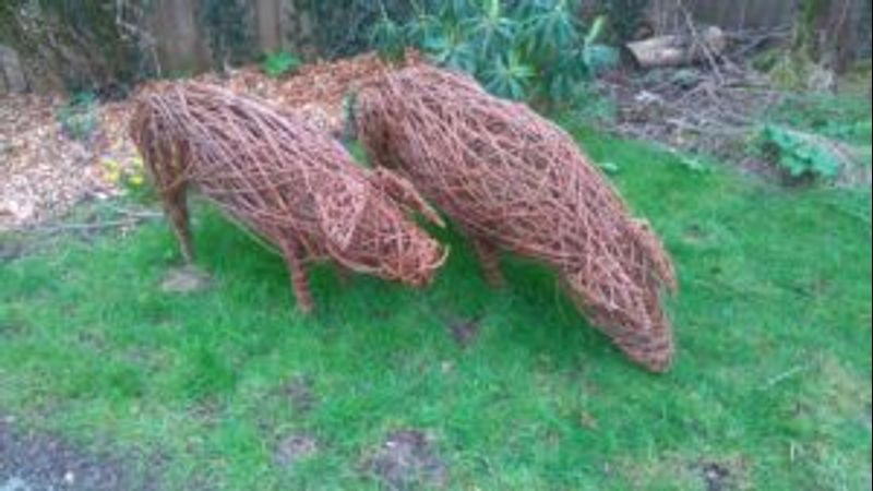 Willow Pigs