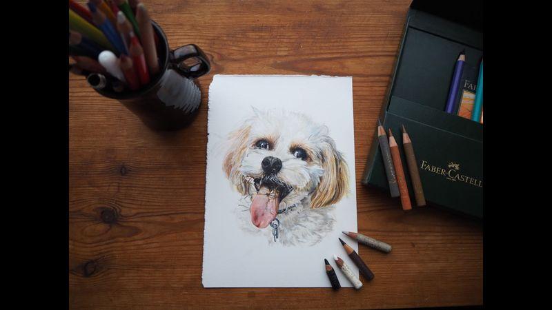 A5 colour pencil pet portrait, head and shoulders.