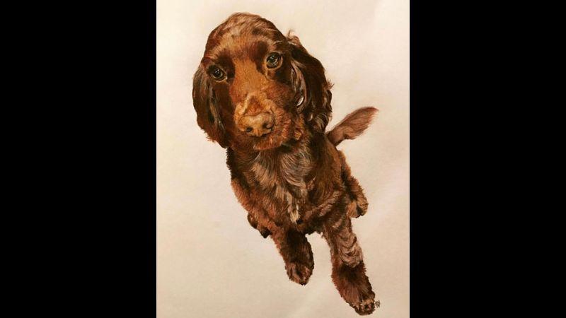 A4 Colour Pencil Pet Portrait