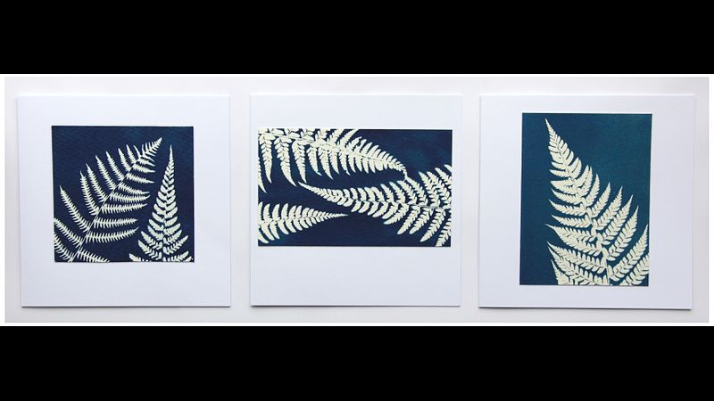 Set of three hand-printed Cyanotype greetings cards: 'ferns'