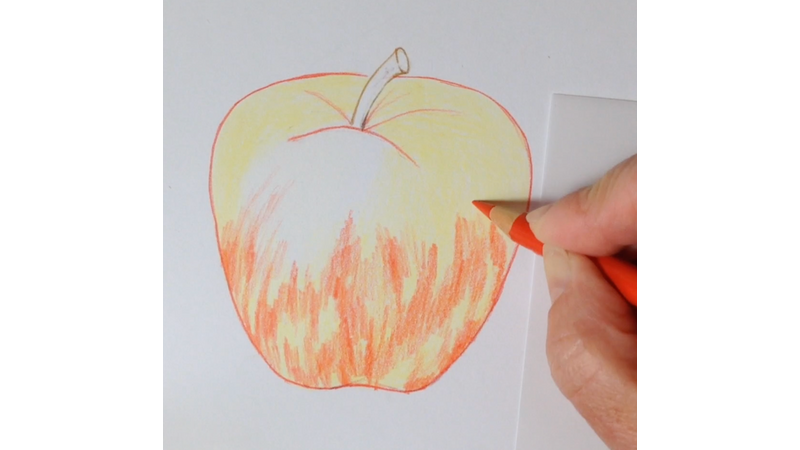 Apple Introduction To Botanical Coloured Pencil Drawing At The Old Kennels Creative Craft And Artisan Courses And Workshops