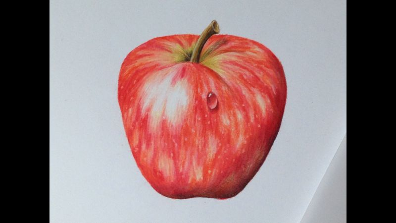 Red Apple introduction to botanical coloured pencil drawing with Linda Hampson at The Old Kennels