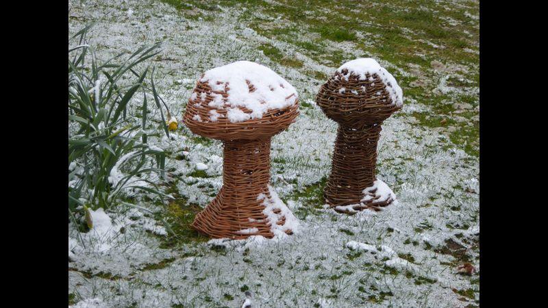 Mushrooms in the snow